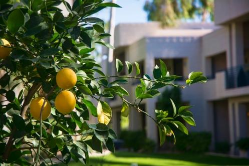 azb oranges